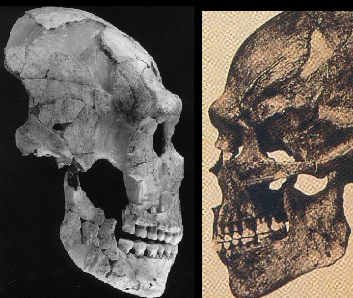 Neanderthal a sinistra, Sapiens a destra