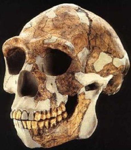 Homo erectus (Pechino)