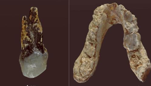 I resti di Graecopithecus Freybergi