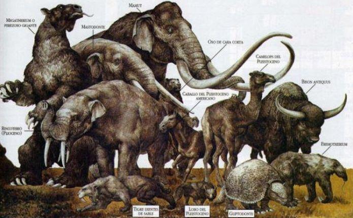 La megafauna pleistocenica