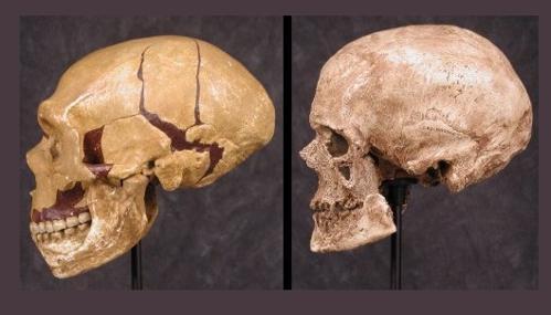 Confronto tra Neanderthal e Cro-Magnon