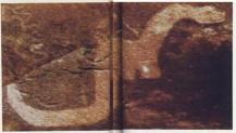 Arte rupestre americana