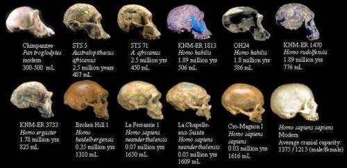 I fossili dell'evoluzione umana